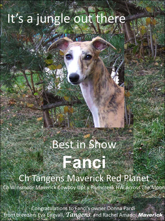 Franci Best In Show